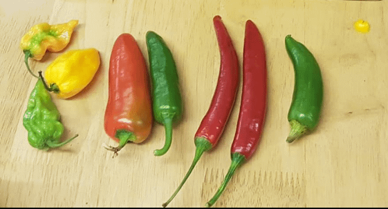 Several green and red chillis laid on a chopping board